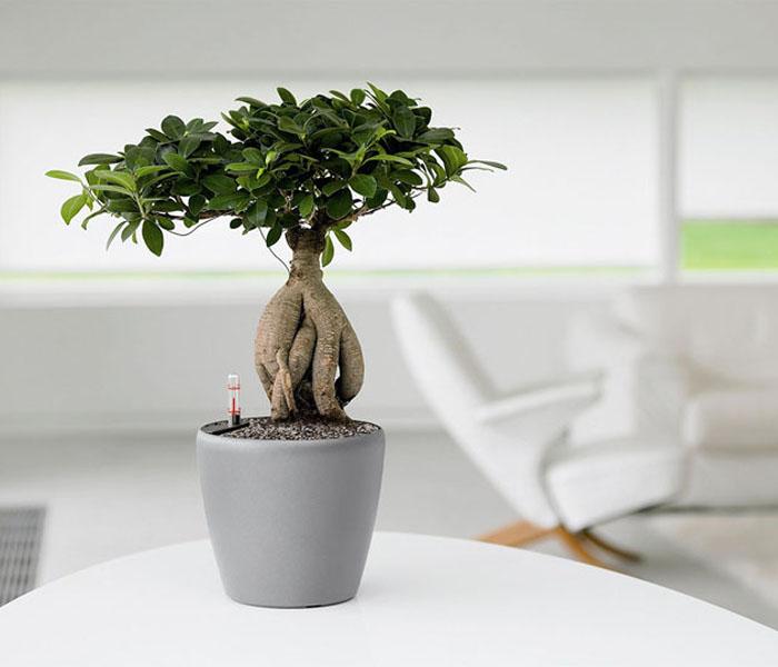 Оживить интерьер помогут комнатные растения